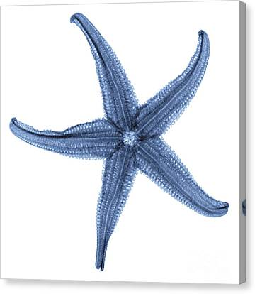 Starfish X-ray Canvas Print by Gustoimages