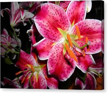 Stargazer Lilies At Night Canvas Print
