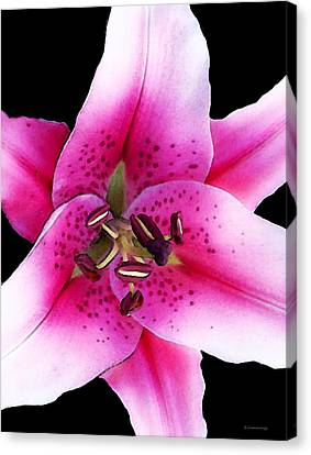 Stargazer Lily By Sharon Cummings Canvas Print by William Patrick