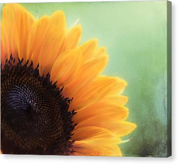 Staring Into The Sun Canvas Print by Amy Tyler