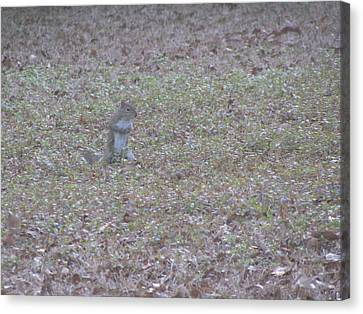 Staring Squirrel Canvas Print by Rickey Rivers Jr