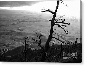 Canvas Print featuring the photograph Stark Tree by Mary Carol Story