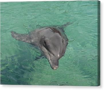 Starlett Dolphin  Canvas Print by Mary J Tait