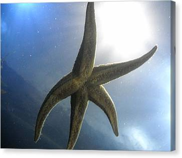 Canvas Print featuring the photograph Starlight by Kristen R Kennedy