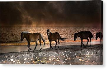 Starry Night Beach Horses Canvas Print