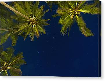 Simple Beauty In Colors Canvas Print - Stars At Night With Palm Tree Thalpe by Ian Cumming