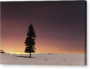 Stars In The Night Sky With Lone Tree Canvas Print by Susan Dykstra