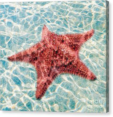 Stars In The Water Canvas Print