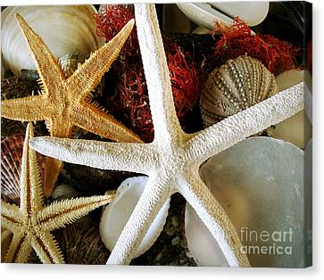 Stars Of The Sea Canvas Print