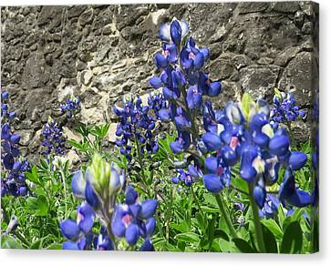 Canvas Print featuring the photograph State Flower Of Texas - Bluebonnets by Ella Kaye Dickey