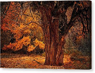 Canvas Print featuring the photograph Stately Oak by Priscilla Burgers