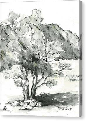Stately Smoketree Canvas Print by Maria Hunt