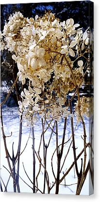 Stay Close Stay Warm Canvas Print by Danielle  Broussard
