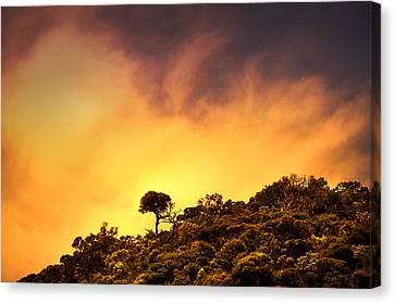 Staying Proud. Horton Plains. Sri Lanka Canvas Print
