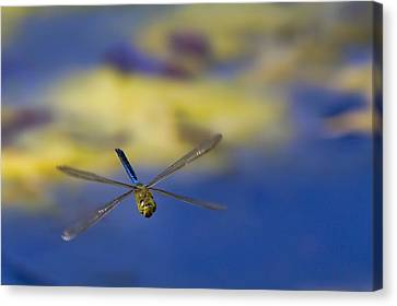 Canvas Print featuring the photograph Stealth Chopper by Gary Holmes