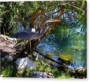 Stealthy Great Blue Heron Canvas Print