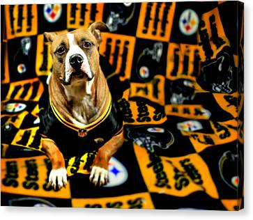 Pitbull Rescue Dog Football Fanatic Canvas Print by Shelley Neff