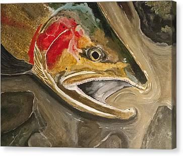 Steelhead Buck Canvas Print