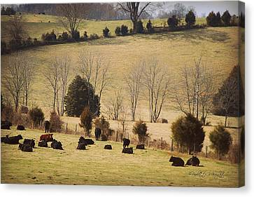 Steers In Rolling Pastures - Kentucky Canvas Print by Paulette B Wright