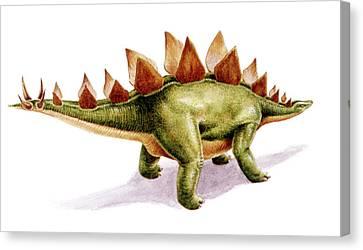 Stegosaurus Dinosaur Canvas Print by Deagostini/uig