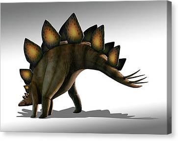 Stegosaurus Dinosaur Canvas Print by Mark Garlick