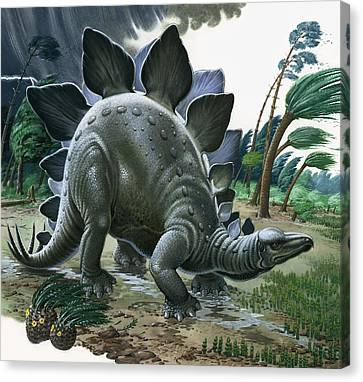 Stegosaurus Canvas Print by English School
