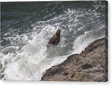 Steller Sea Lion - 0018 Canvas Print by S and S Photo