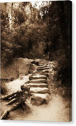 Step Into Nature Canvas Print by Aron Kearney