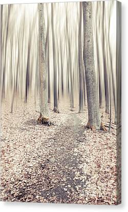 Hannes Cmarits Canvas Print - Steppin' Through The Last Days Of Autumn by Hannes Cmarits