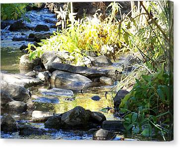Canvas Print featuring the photograph Stepping Stones by Sheri Keith