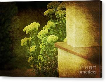 Steps Canvas Print by Rosemary Aubut