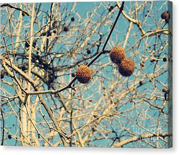 Sticks And Pods Canvas Print