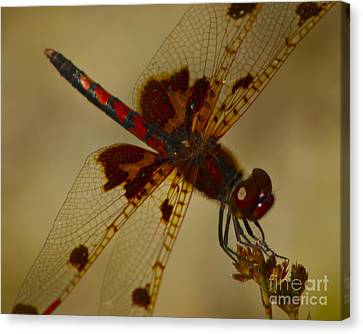 Canvas Print featuring the photograph Still by Alice Mainville