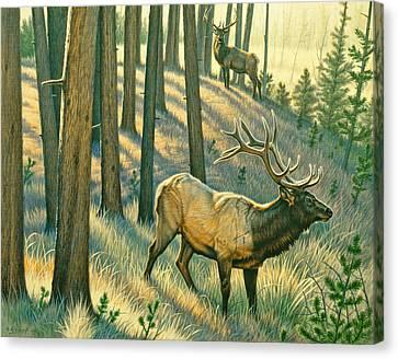 Still Champiion Canvas Print
