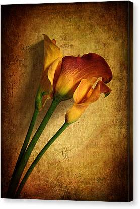 Still Life Calla Canvas Print by Jessica Jenney