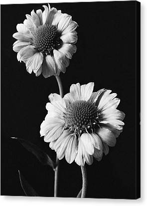 Still Life Of Flowers Canvas Print by J. Horace McFarland