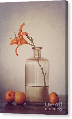 Still Life With Apricots Canvas Print by Diana Kraleva