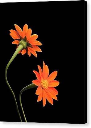Canvas Print featuring the photograph Still Life With Flowers by Krasimir Tolev