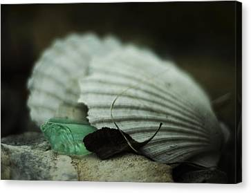 Still Life With Fossil Shells And Beach Glass Canvas Print by Rebecca Sherman
