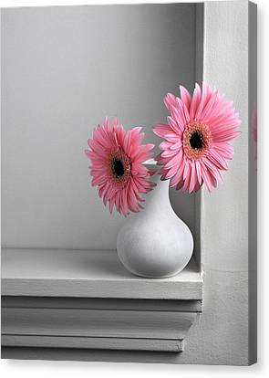 Canvas Print featuring the photograph Still Life With Pink Gerberas by Krasimir Tolev
