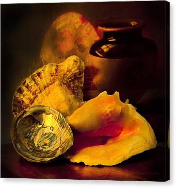 Still Life With Shells Canvas Print