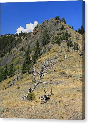 Canvas Print featuring the photograph Still Standing by Kathleen Scanlan