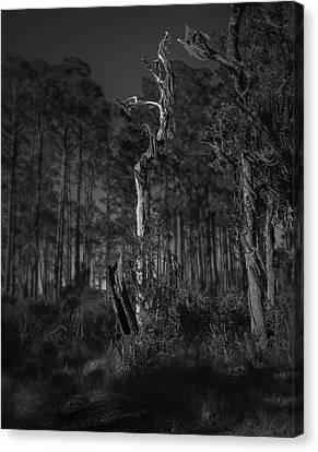 Canvas Print - Still Standing by Mario Celzner
