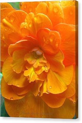 Still The One - Images From The Garden Canvas Print