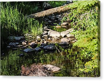 Still Waters 1 Canvas Print