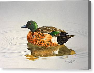 Still Waters - Chestnut Teal Canvas Print by Frances McMahon