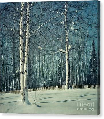 Still Winter Canvas Print