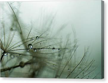 Stillness Canvas Print by Eiwy Ahlund