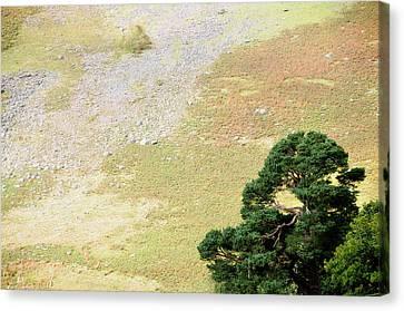 Stillness. Wicklow Mountains. Ireland Canvas Print by Jenny Rainbow