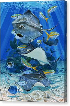 Stingray City Re0011 Canvas Print by Carey Chen